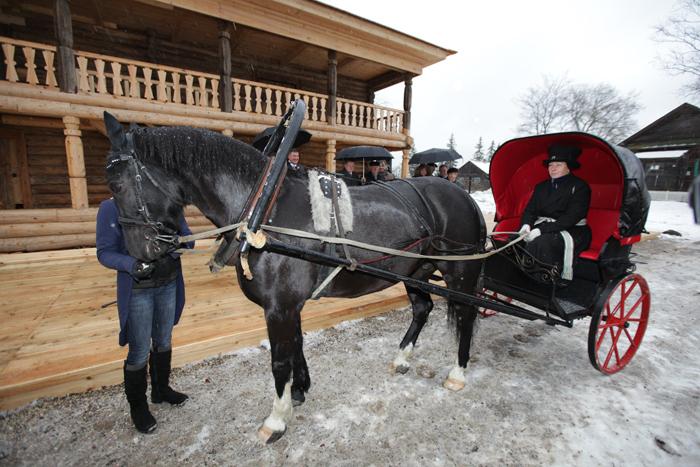 Бидарка для лошади своими руками 61